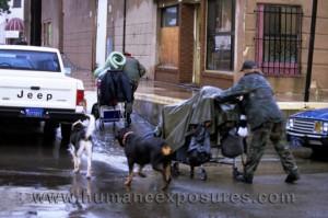 HumaneExposures4
