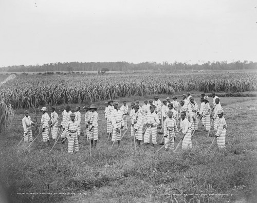 Wikipedia Juvenile Convicts_(1903)